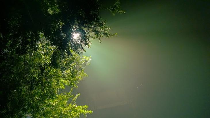 evergreen-2178702_1280
