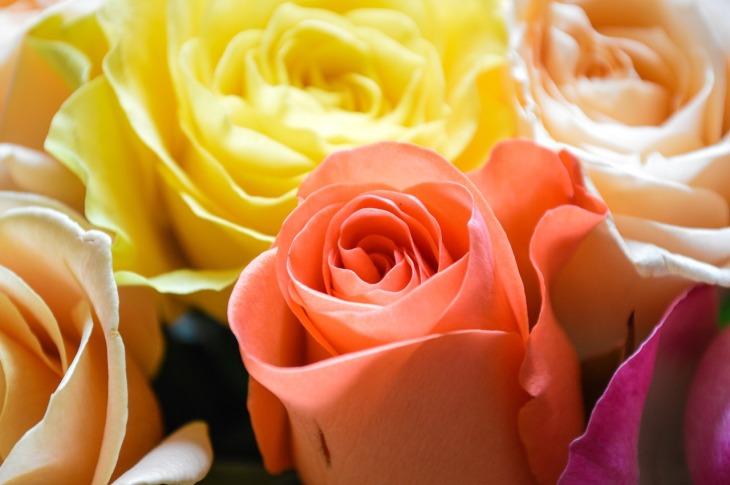 roses-3976621_1280